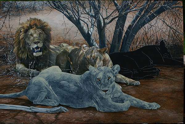 The male lion and middle lioness are now done and the front lioness and